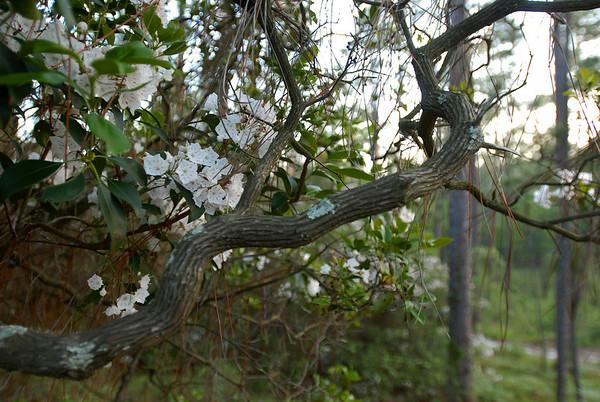 Hitchcock Woods, Aiken