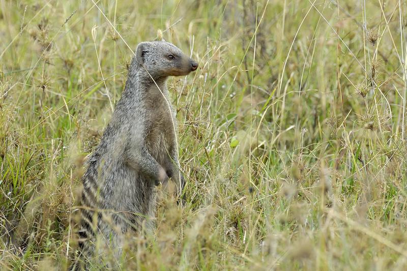 Kenya Aug 2007 038.JPG