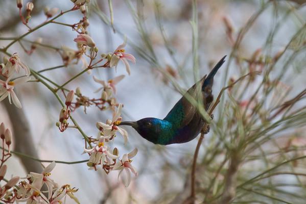 Birds of Israel, 2010-2011