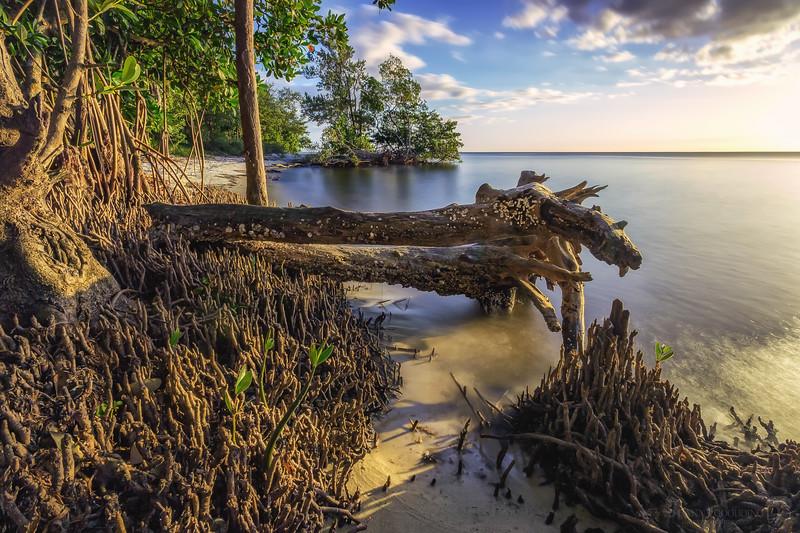 Mangrove long exposure