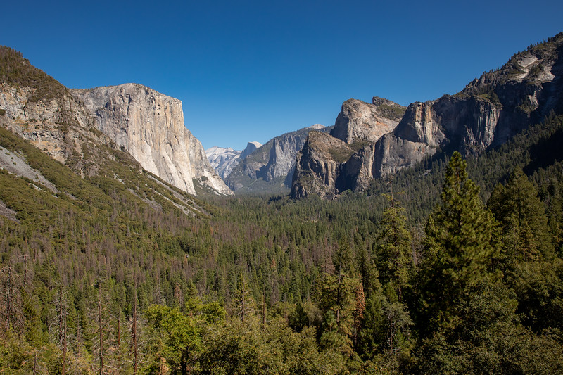 WVWS_Yosemite National Park-6998.jpg
