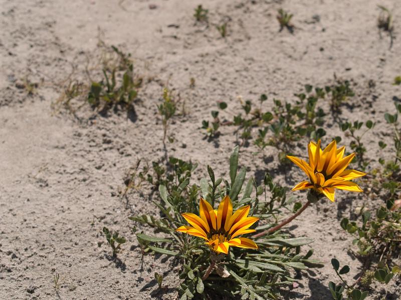 Jamie Spring in the Desert