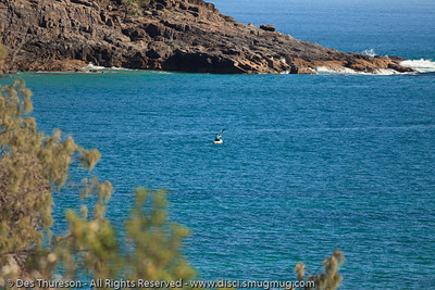 Birds & Bays: Beautiful Noosa National Park, Sunshine Coast, Queensland, Australia; in Winter. Photos by Des Thureson.