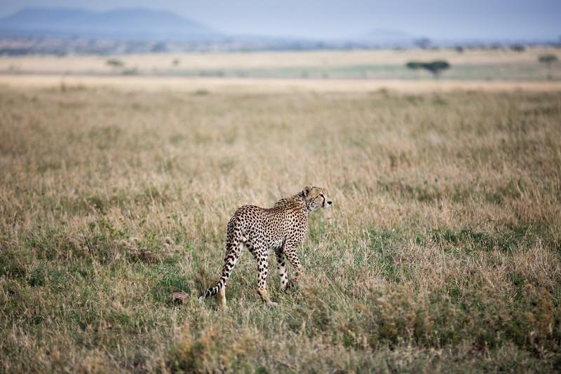 Africa - 101616 - 3927.jpg