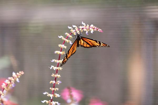 Birmingham Zoo Butterflies, insects, spiders, invertebrates