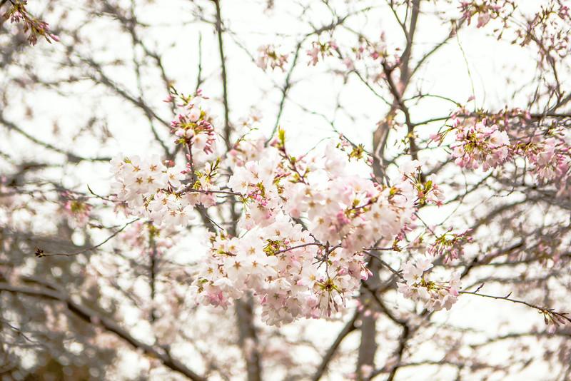 2014_03_22_Arboretum_family-26.jpg