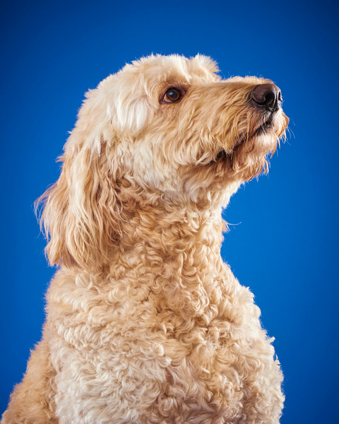 2016_12_24_Christmas Dogs4095.jpg