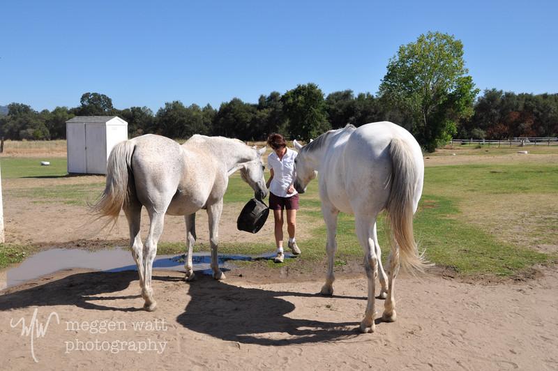EB&Horses-010.jpg