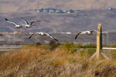 Alviso Salt Ponds and Marshlands