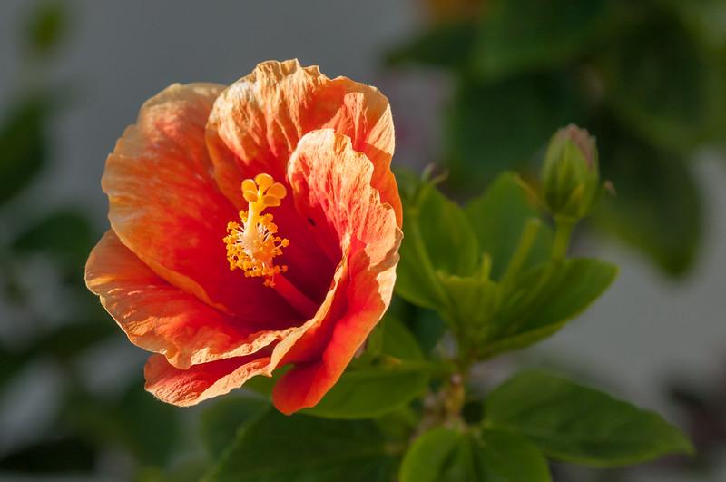 Sea Watch Flower 5