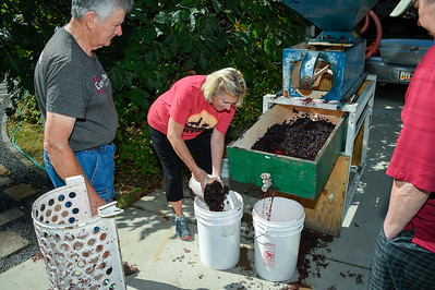 LLL Winemaking