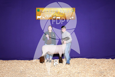 Breeding Sheep Backdrops