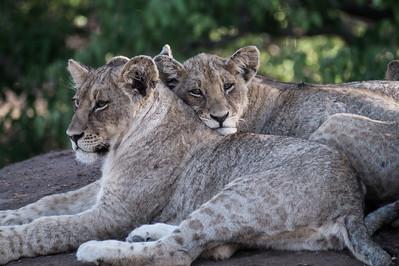 Mashatu, Tuli Game Reserve