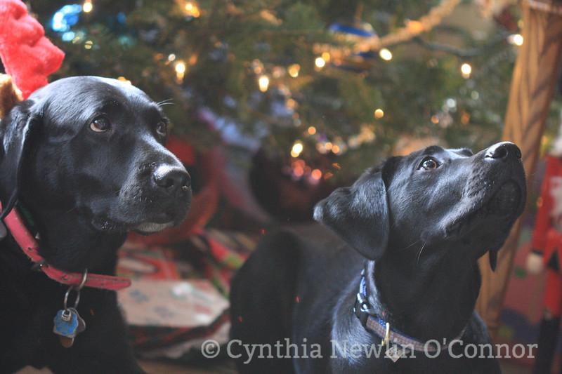 christmas dogs (9).jpg