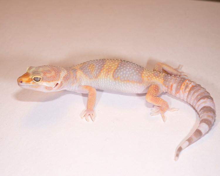 LG3915, $30, Tremper Albino, TSF, 30 grams, sold Nick A.