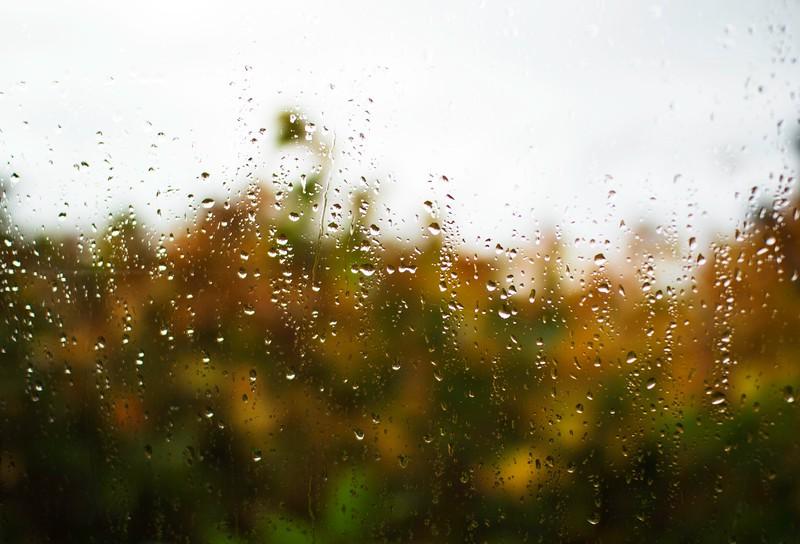 Raindrop Fall Trees Colourfb.jpg