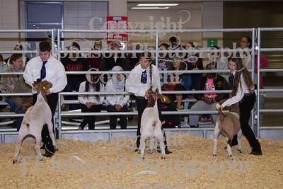 2014 KISD Livestock Show Goats Class 5