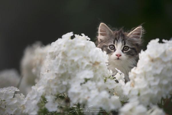 SPCA Foster Kittens