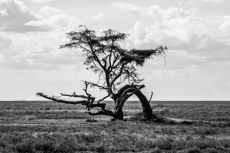 Tanzania_Feb_2018-876.jpg