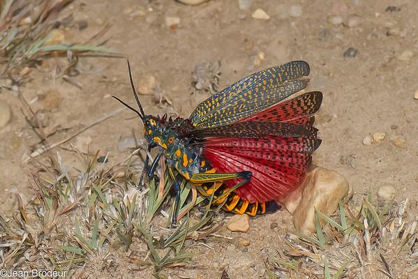 Insectes de Madagascar