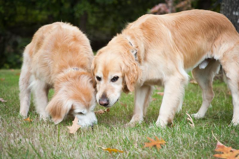 Bonnie&Dakota after treats.JPG