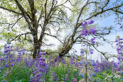 Northern California
