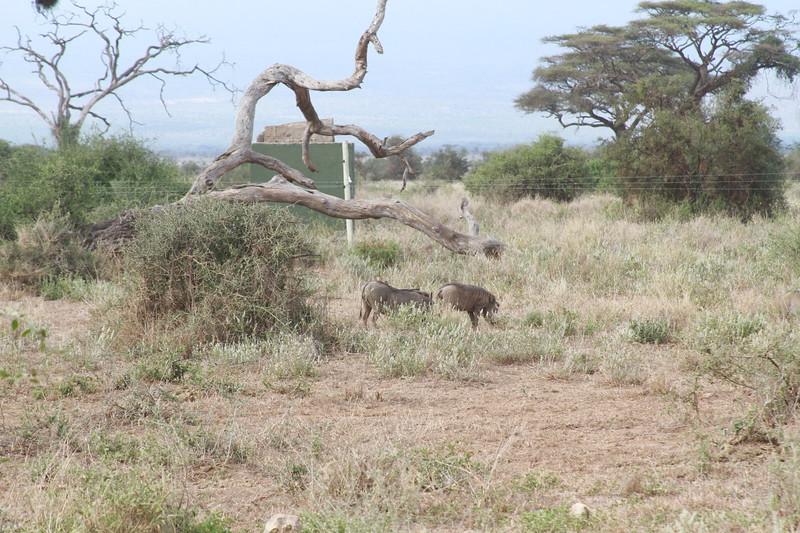 Kenya 2019 #2 717.JPG