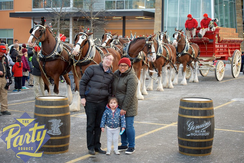 Clydesdale Portraits 340.jpg