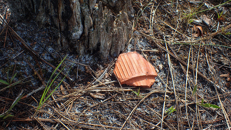 Shard of a clay cup on pine needles
