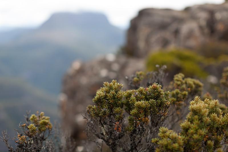 Tasmania_2015_197.jpg