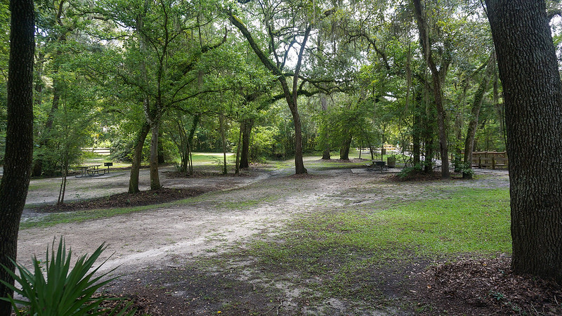 Picnic grove under trees