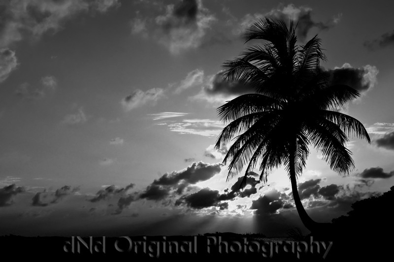 087 Bahamas 2008 - 2nd Sunrise (nik b&w).jpg
