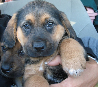 2007 Rescued Puppies