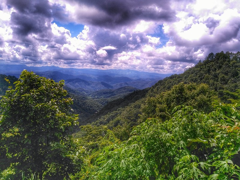 Header Image - Samoeng Forest Lookout.jpg