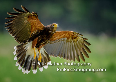 Just Hawks