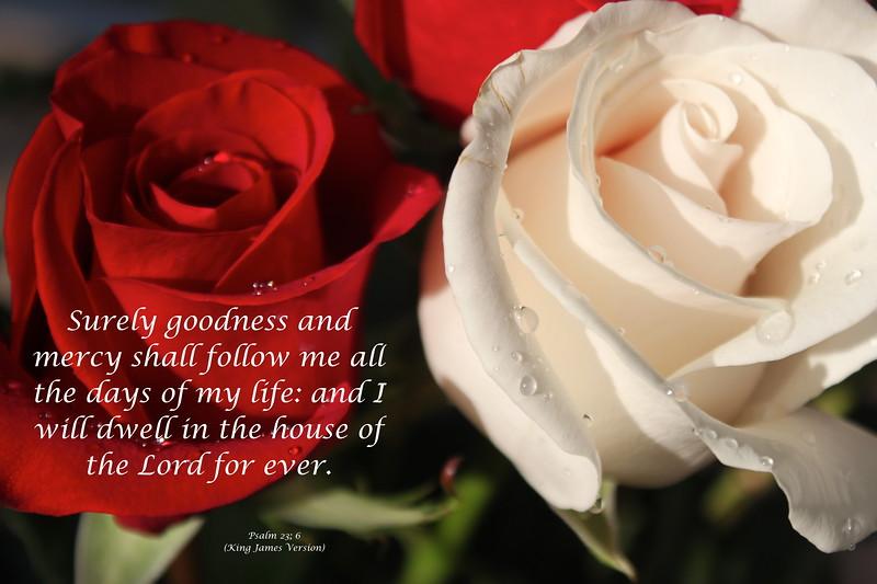 Psalms 23-6.JPG