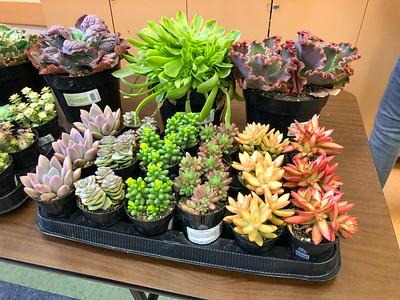Feb 2019 Jeff Moore - Succulents