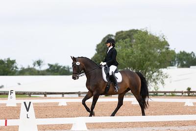 Horse 398