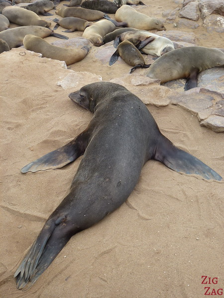 Cape cross fur seal colony, Namibia photo 2