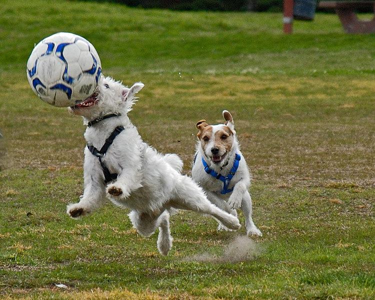 cropped ball game.jpg