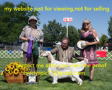2019.08-English Setter club of great Denver Specialtes