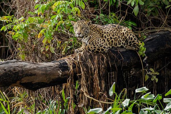 Brazil's Pantanal 2016