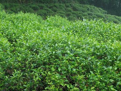 Mei Jiawu Tea Village