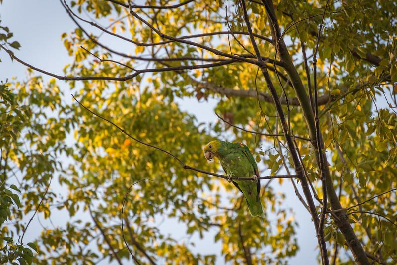 Parrots7Aug2014-3745-Edit.jpg