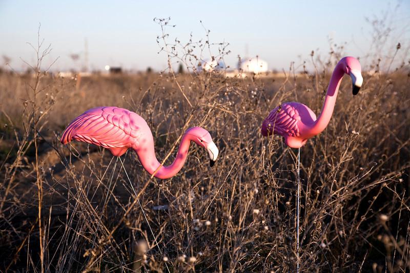 flamingo02.jpg