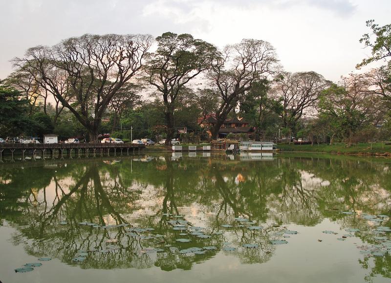 Trees on Kandawgyi lake