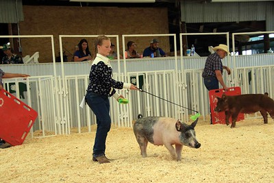 Feeder Swine Class 1