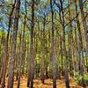 ForestDamNeck-001