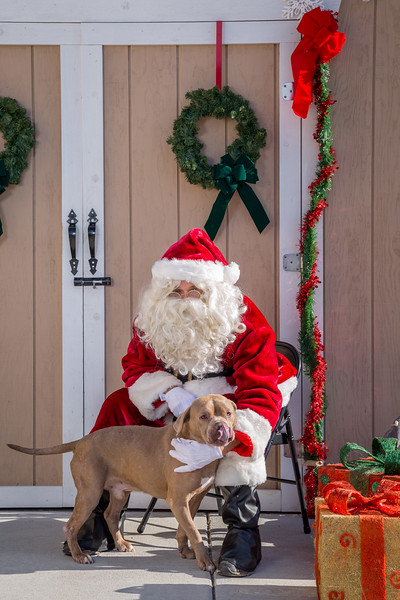 Pet Pictures With Santa-88.jpg