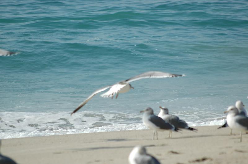 gulls (9).JPG